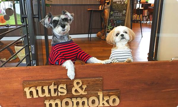 ナッツ & モモコ